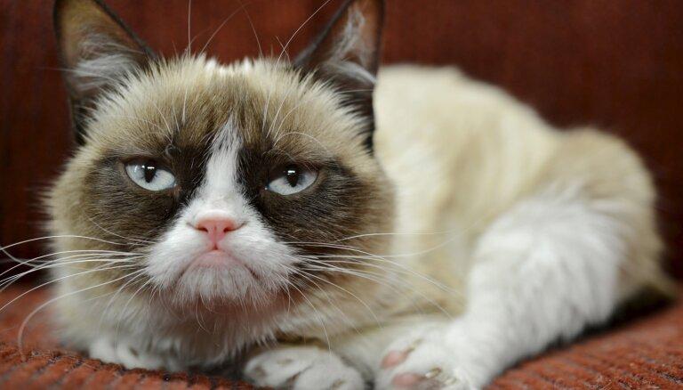 Septiņu gadu vecumā miris 'Instagram' zvaigzne Nīgrais kaķis