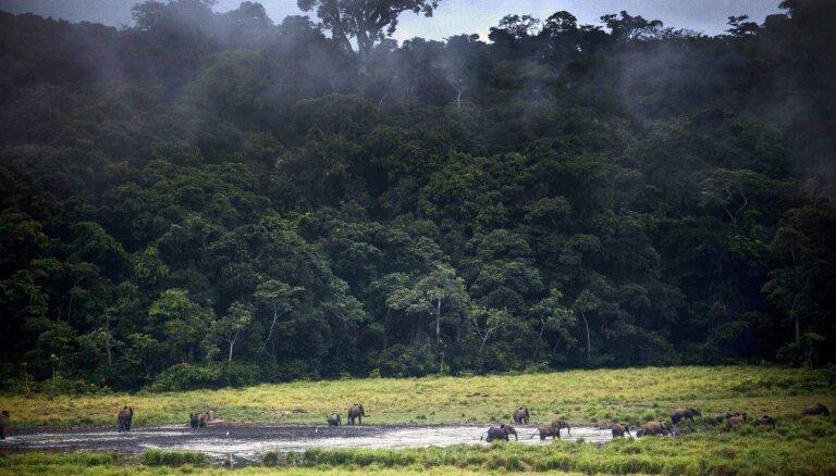 Gabona pirmā Āfrikā saņems ANO miljonus par mežu saglabāšanu