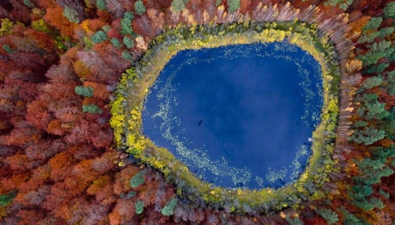 Поразительная красота польских лесов с высоты птичьего полета (ФОТО)