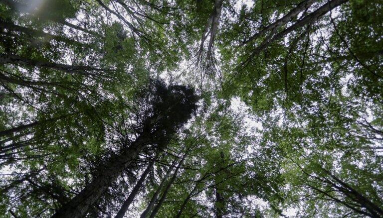 Piektdien glābēji palīdzējuši pieciem cilvēkiem, kuri apmaldījušies mežā