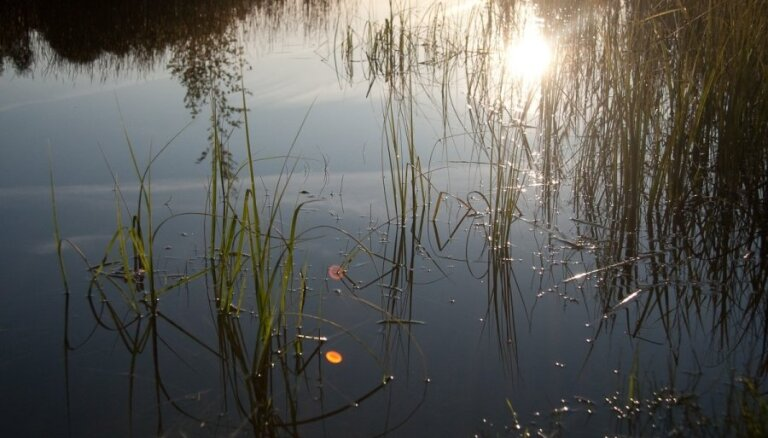 Pēc peldes ūdensžurku apdzīvotā dīķī sešiem bērniem atklāj bīstamo infekciju - tularēmiju