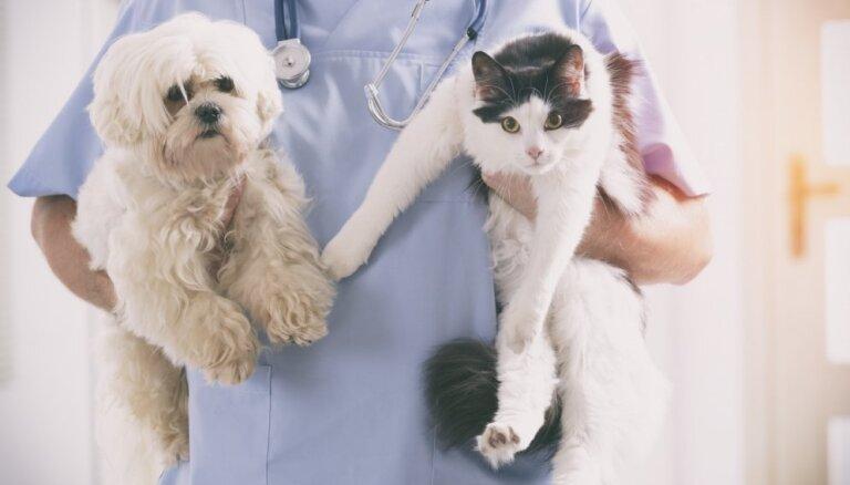 10 психических расстройств человека, которыми страдают животные