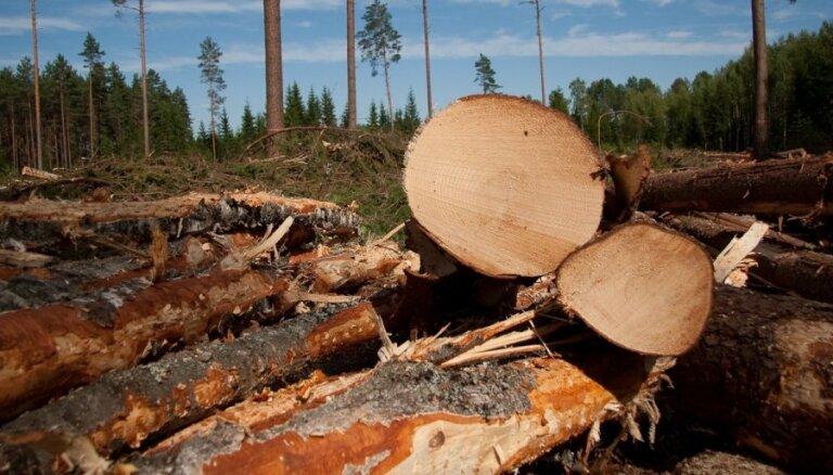Aizkraukles pašvaldība no uzņēmuma 'Ošukalns' piedzen zaudējumus par patvaļīgi nocirstajiem kokiem