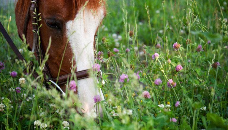 Dzīvnieki ārstē cilvēkus. Par zirgiem