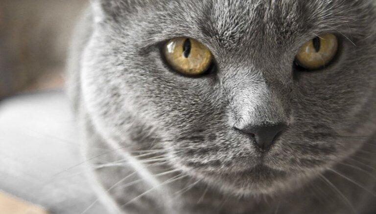 Какую кошку выбрать: породистую или беспородную?