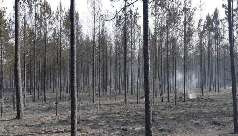 'Rīgas mežu' teritorijās šovasar dzēsti 47 ugunsgrēki, no tiem postošākais – Garkalnē