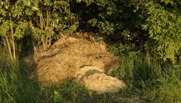 Lasītājs apgalvo, ka Lucavsalā atstātas cirka dzīvnieku mēslu kaudzes; pašvaldība to noliedz