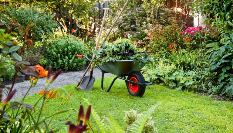 Что посеять в саду и огороде в августе