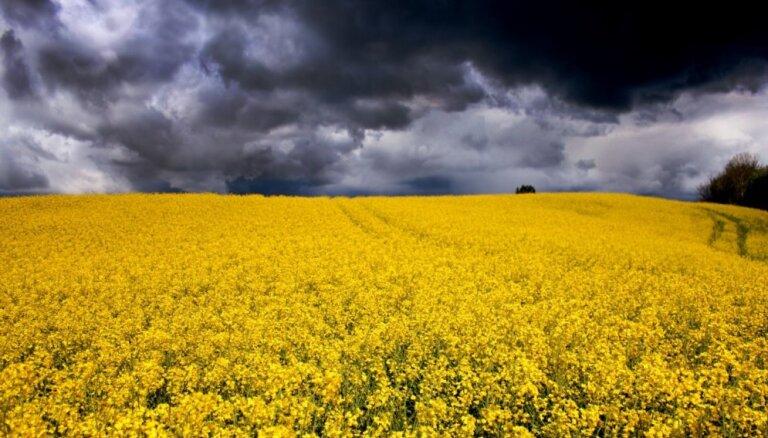 Синоптики: в четверг ожидаются ливни и грозы, во время грозы усилится ветер