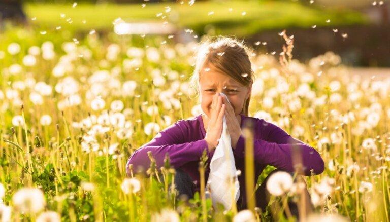 Šķavas, asaras un iesnas ik pavasari. Atspēkojam populārus mītus par alerģijām