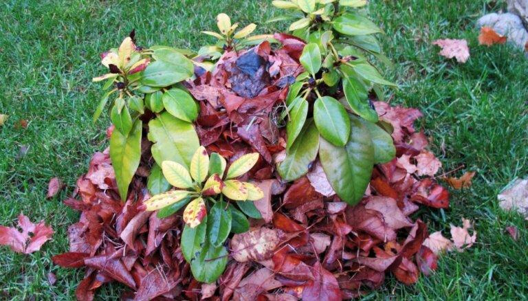 Сад, огород и цветник в ноябре — последние работы перед зимой (+пара секретов)
