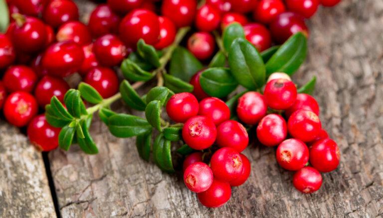 Создаем запасы осенних ягод на зиму: почему это важно и что при этом нужно учесть