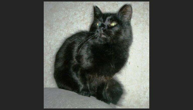 Melns kaķis meklē mājas