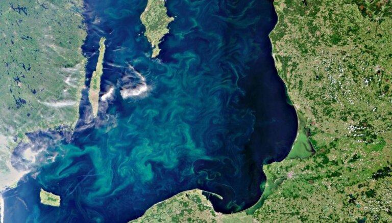 Из-за опасных водорослей ограничено купание на нескольких пляжах