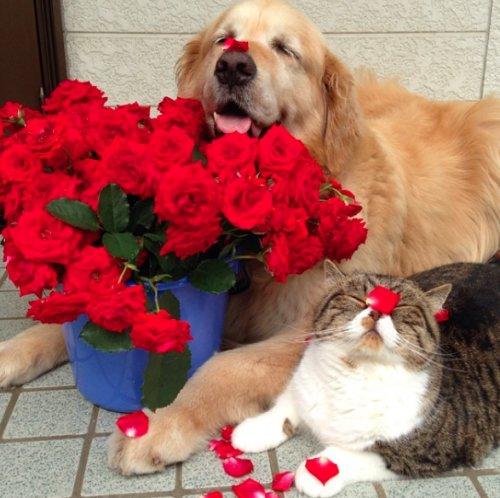 Dzīve - rožu dārzs