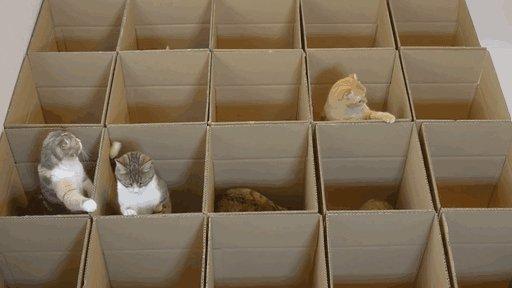 Kaķu kaste...