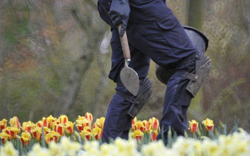 Дуранта: уход в домашних условиях, виды цветка и 98