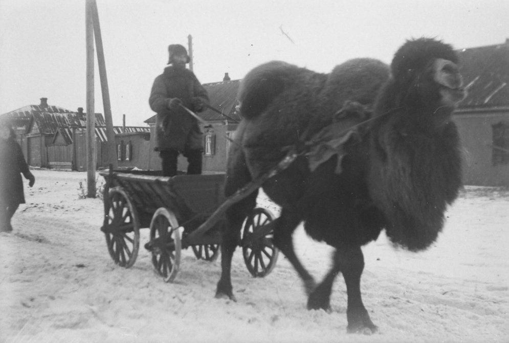 Уникальные кадры: Советская Россия глазами латышского стрелка, охранявшего Ленина