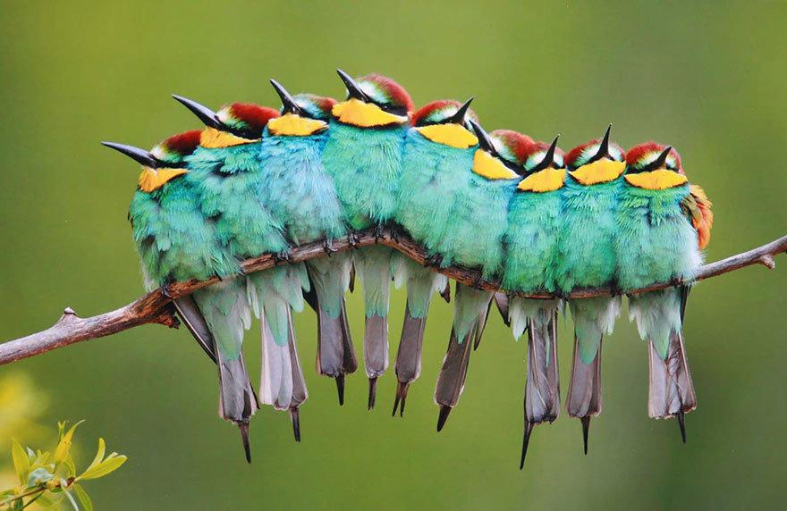 Локтем к локтю, спиной к спине: эти птицы растопят твое сердце