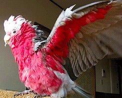 Vienkārši papagailis...