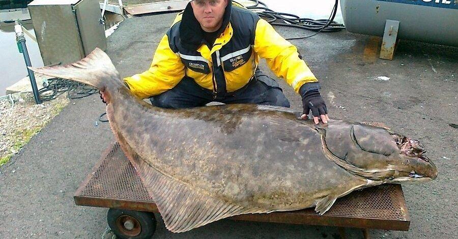 рыбалка на палтуса фото