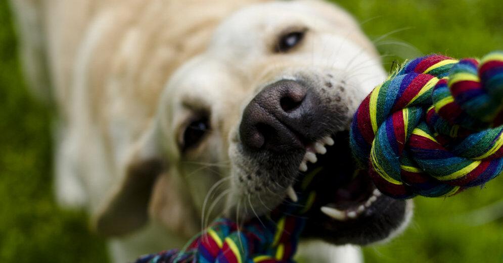 как знакомить собаку с другими людьми