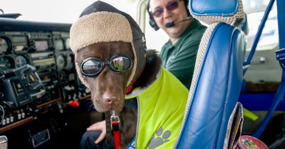 Веселые картинки про пилотов, начальнику день рождения