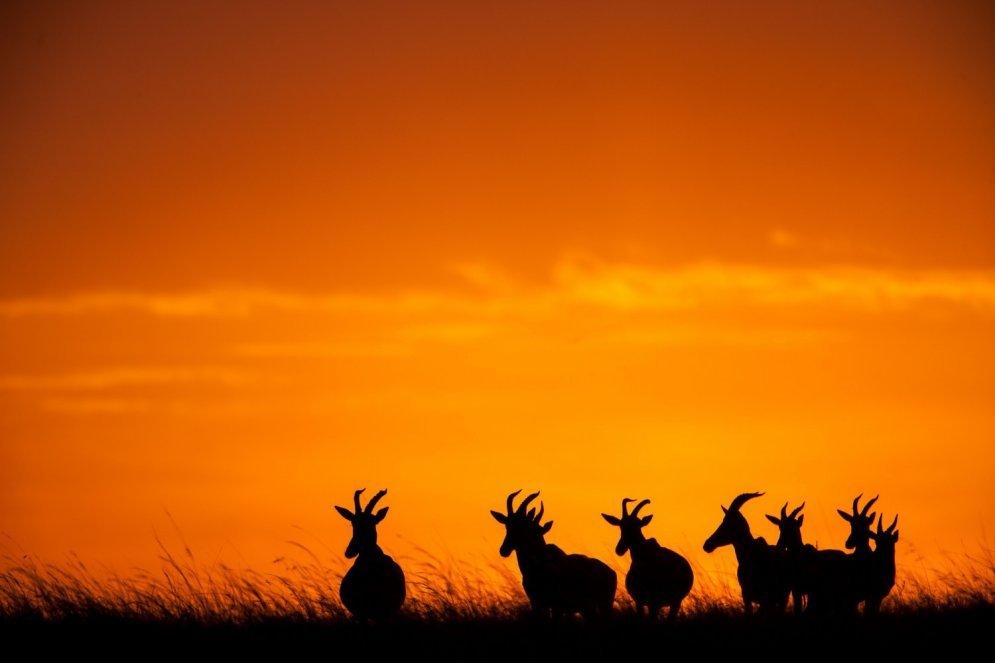Невероятные восходы и закаты в заповеднике Масаи-Мара
