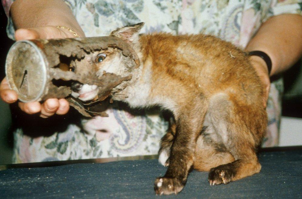 Šaurā bezizeja: nabaga dzīvnieki, kas iesprūduši nelāgās vietās