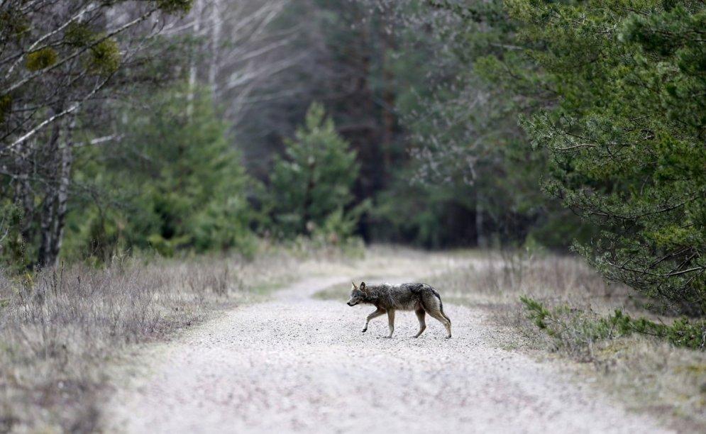 В Зоне отчуждения в Чернобыле завелись существа на четырех ногах и с двумя крыльями
