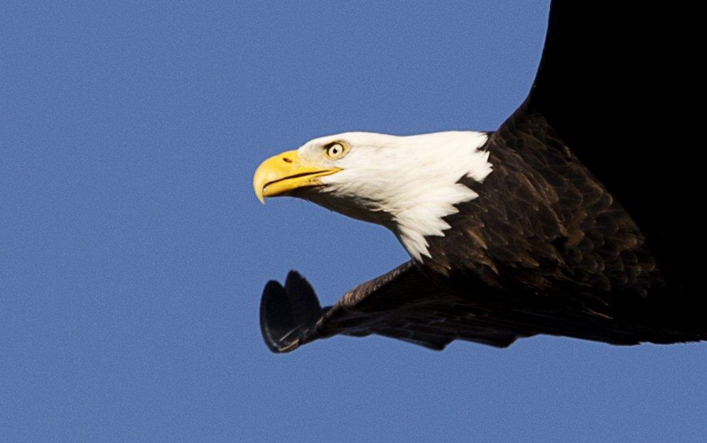 Хочешь знать, почему орланов всегда фотографируют только в профиль? Смотри!