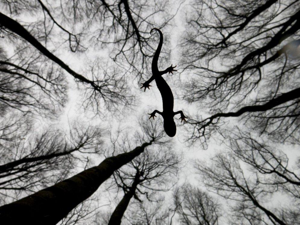 Izvēlētas desmit labākās 2015. gada dabas fotogrāfijas