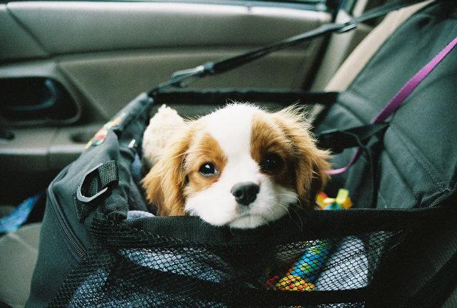 """Давай играть! 12 собак, которые и не подозревают о том, насколько они """"мимими"""""""