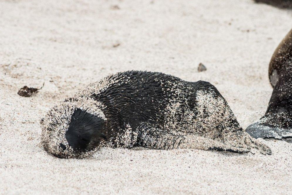 Ko darīt un nedarīt ar smilšainu roni jūras krastā