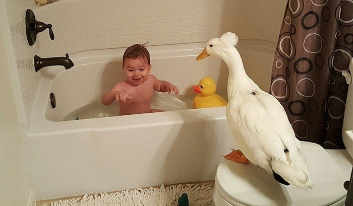 Neparasta draudzība: Puisēns un pīle