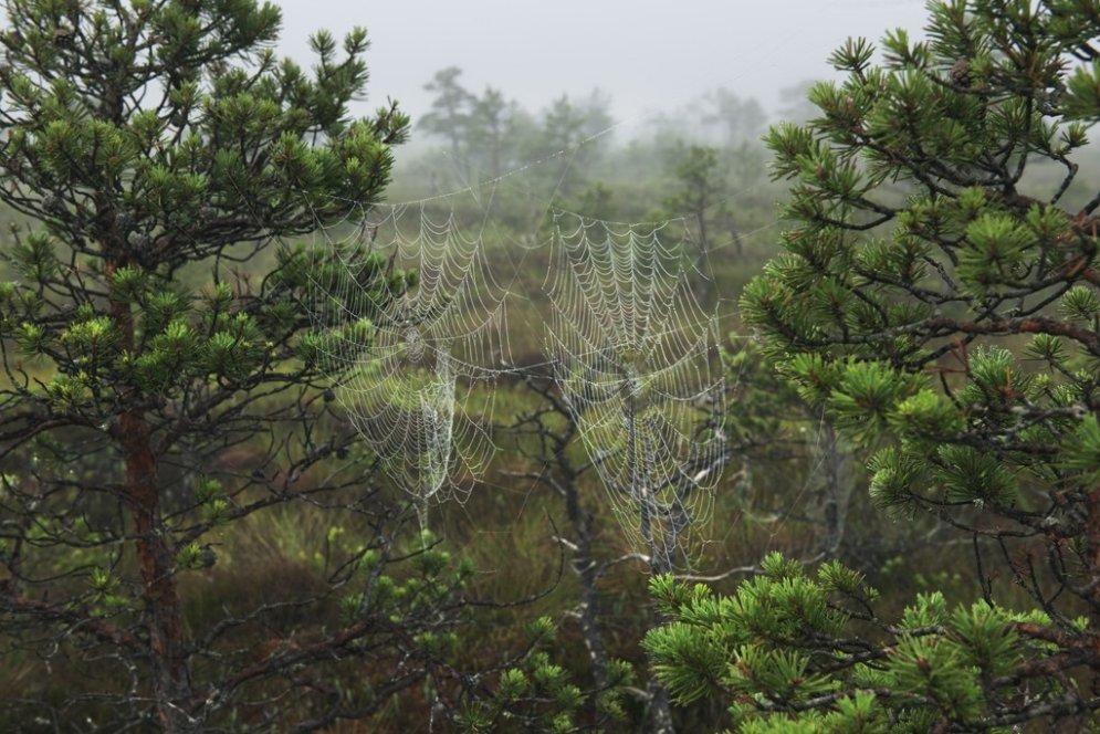 Meža veltes skaistumkopšanā
