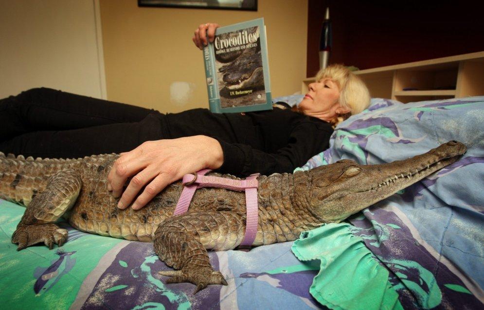 Austrālijā sieviete dzīvo un guļ kopā ar krokodilu Džoniju