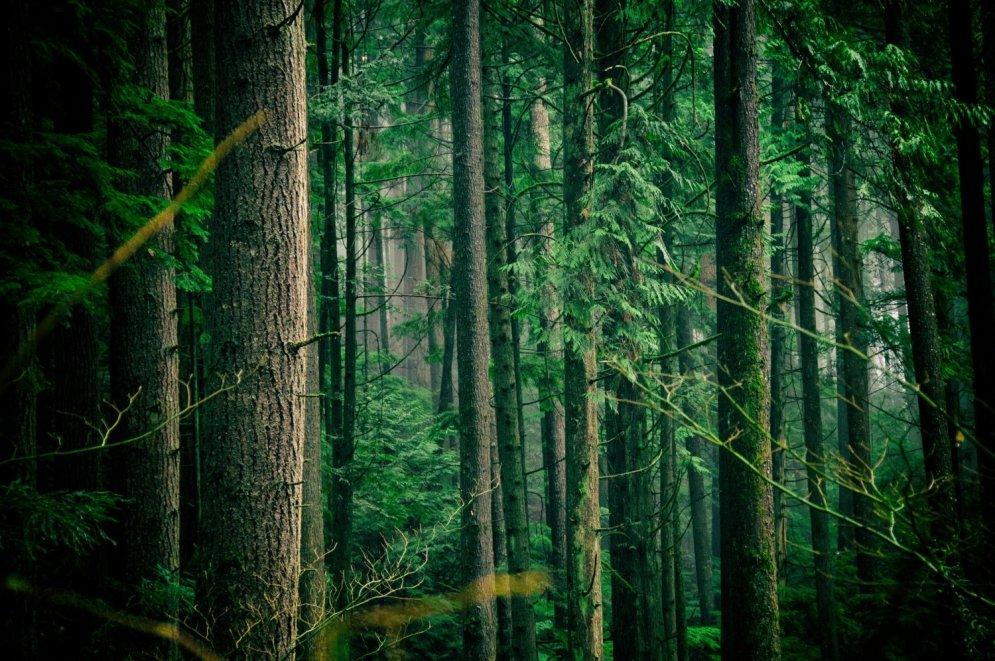 Stāsta varonis – mežs