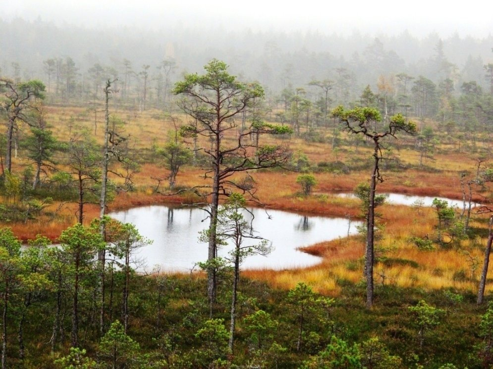 Rudens krāšņums purvu ainavās